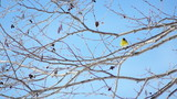 winter birds in trees