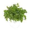 Large bunch watercress