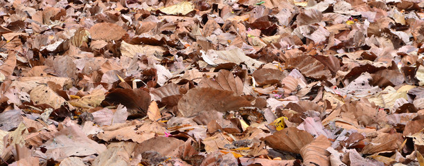 panorama of dry leaf on ground