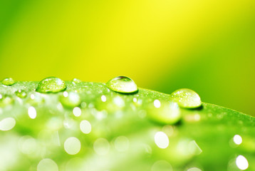 green leaf with water droplets close up