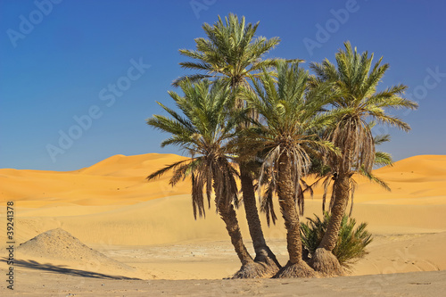 palms in the Sahara desert