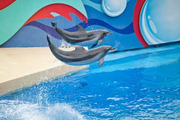 Hong Kong's Ocean Park dolphin performances