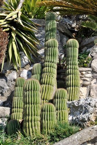 Aiuola di piante grasse from sergiogen royalty free stock for Aiuola piante grasse