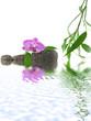 décor zen détente, eau, orchidée, galets, bambou