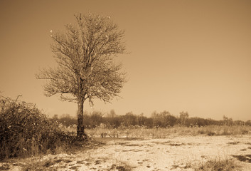 Solitairy tree in a Dutch winter landscape (antique light)