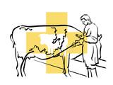 Fototapete Tier - Medikament - Nutztiere