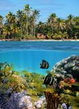 Fototapety Sealife and tropical beach
