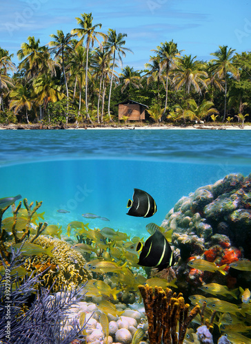Sealife and tropical beach