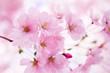 Fototapeten,april,hintergrund,schöner,schönheit