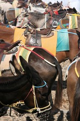 Esel auf Santorin
