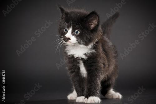 Norwegische Waldkatze Größe Norwegische Waldkatze Kitten
