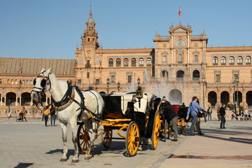 white horse carriage in Seville
