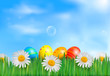 Easter eggs in the grass with daisies  Vector
