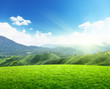 field of spring grass and mountain