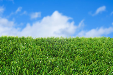 grass and the sky