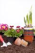 Studioaufnahme- Gartenarbeit - Blumen pflanzen