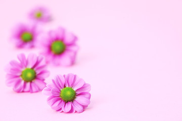 Rosa Blumen -  Rosa Frühlingsblumen Karte