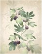 Greeting card with fig tree.