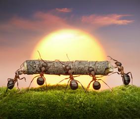 team of ants carry log on sunset, teamwork concept