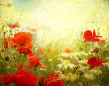Fototapety grunge poppies background