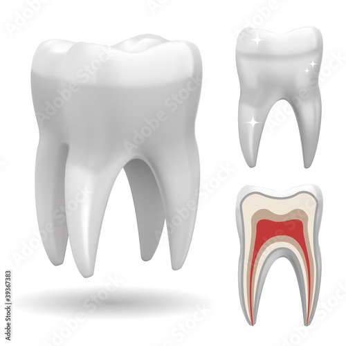 Isolated three-dimensional tooth, with front and cut version