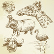 wild animals - hand drawn set