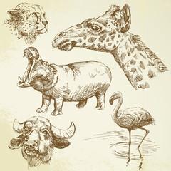 wild animals - hand drawn set