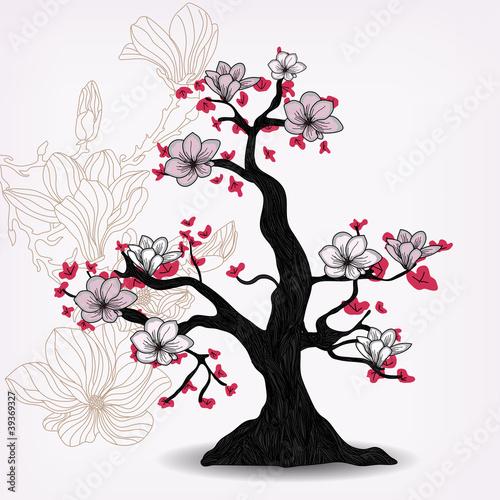 drzewo-magnolii