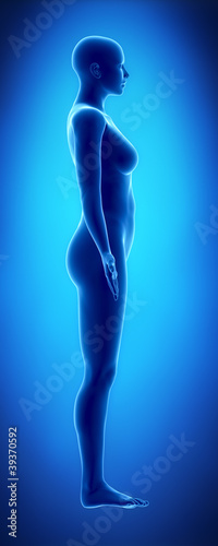poster of Female figure in anatomical position lateral  view