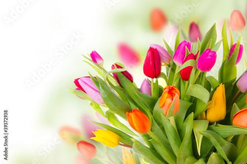Fototapety, obrazy : Fresh tulips bouquet