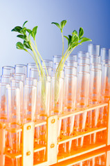 Experiment with green seedlings in the lab
