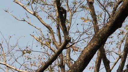 Small chipmunk on tree