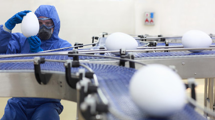 engineer  examining xxl size egg at production line