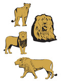 Asiatic lion illustration poster