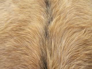 Goatskin, piel de cabra.
