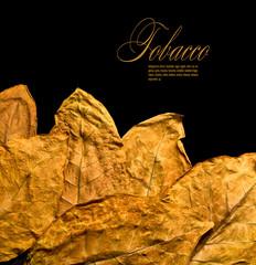 dry leafs tobacco
