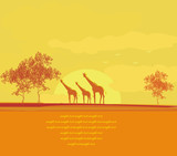 grunge background with African fauna and flora poster