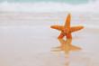 starfish on beach, blue sea and reflection
