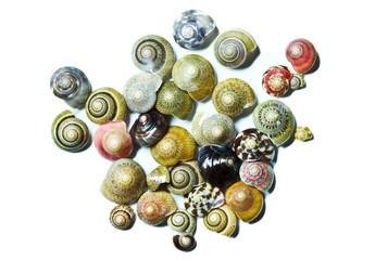 An image of seashells on white background