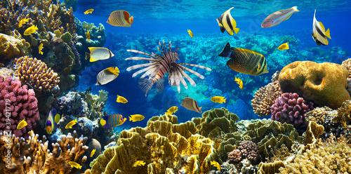 Leinwandbilder,korallen,fisch,rot,riff