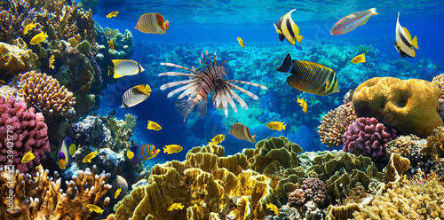 Fototapeten,korallen,fisch,rot,riff