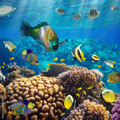 Koral kolonii koralowców i ryb