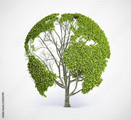 drzewo-mapy-ziemi