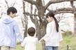 桜並木を散歩する家族の後姿