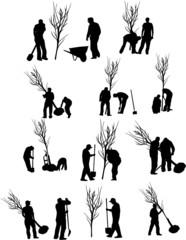 PLANTATIONS D'ARBUSTES