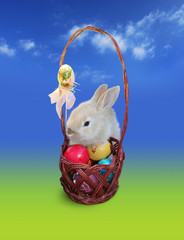 Cute Easter bunny  with eggs basket, isolated