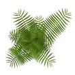 3d render of chrysalidocarpus plant