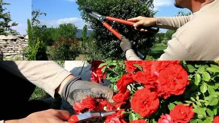 le grand jardinier....