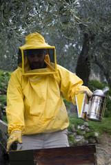 Beekeeper opened bee hive