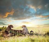 Fototapete Afrika - Afrikakarte - Säugetiere